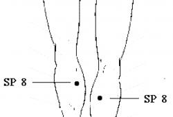 spleen meridian point 8